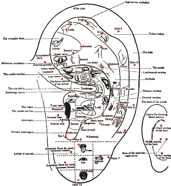 Map of all the ear points